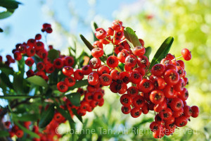 In bright sunlight, red, green, blue, vibrant colors of fall/autumn, Christmas red berries.